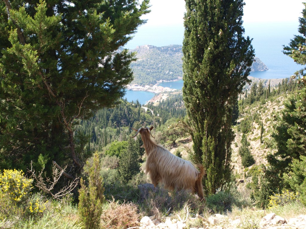 Grazing above Assos