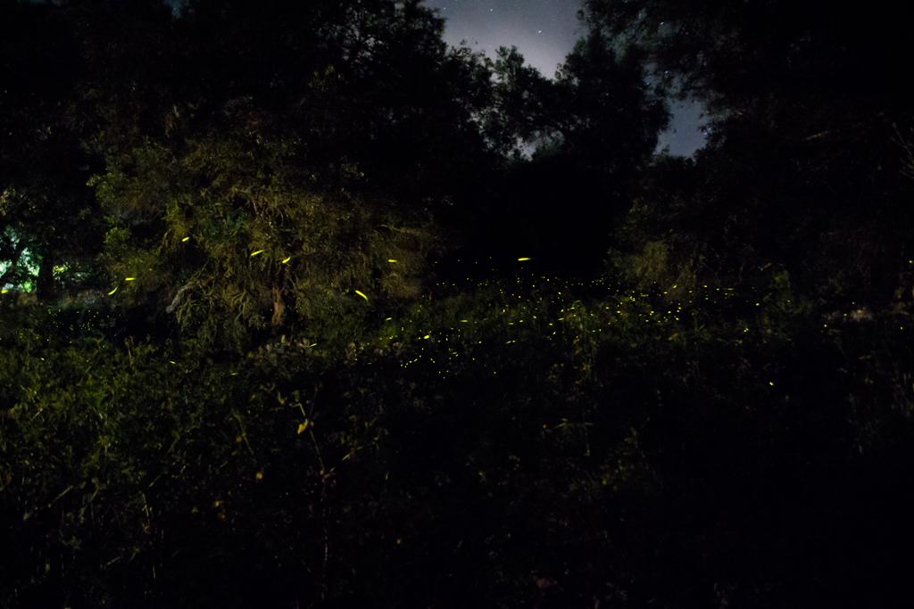 Tinkerbell Fireflies