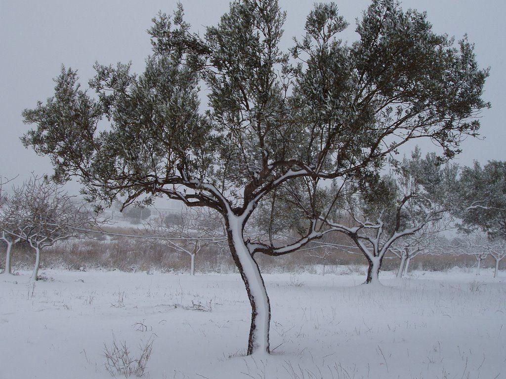 greece-olive-snow